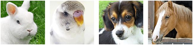 Tierarztpraxis Maria Bauch logo