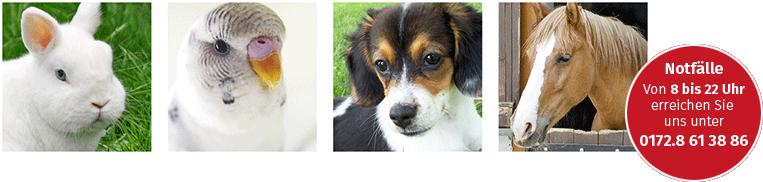 Tierarztpraxis Bauch logo